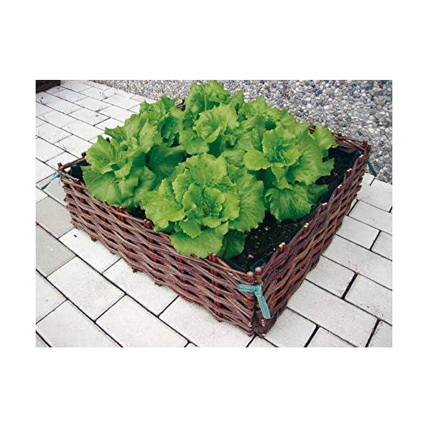 VERDEMAX 8015358022583 orto in salice-Giardinaggio contenitori da Raccolta, Unica 5 spesavip