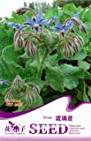 FLOWER GODDESS Borage Blue Starflower Culinary Herb 20 Seeds