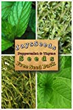 buy Fruit Combo Pack Raspberry, Blackberry, Blueberry, Strawberry, Grape (Organic) 525+ Seeds + You Pick Free Seed Packs (Peppermint & Thyme) now, new 2018-2017 bestseller, review and Photo, best price $7.35