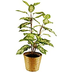 """LCG Florals 16TFP21V Dieffenbachia Floor Plant In A Basket with Faux Dirt, 48"""" ,,"""