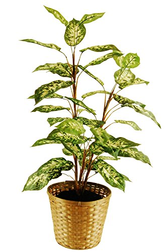 "LCG Florals 16TFP21V Dieffenbachia Floor Plant In A Basket with Faux Dirt, 48"" ,,"