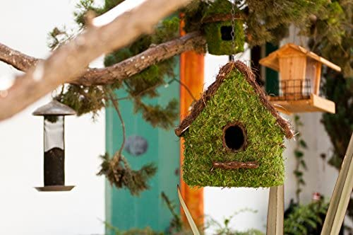 Marshall Home and Garden Moss Fuzzy Green 8 x 6 Wood Bird House with Hanging Hook On Top