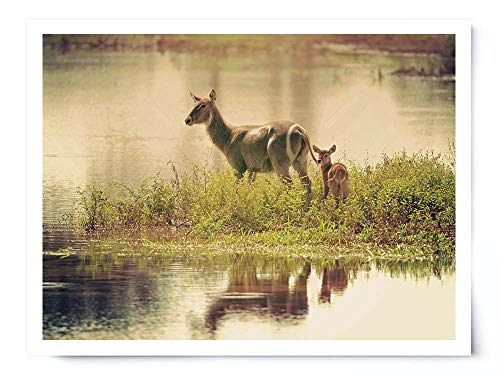 Waterbuck Mother and Baby - Wildlife Photograph Animal Picture Home Decor Wall Nature Print - Variety of Sizes Available by Whimsical Wild Artwork