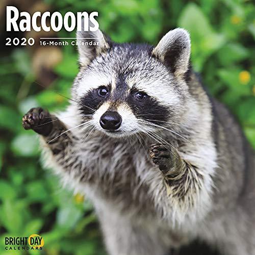 2020 Raccoons Wall Calendar