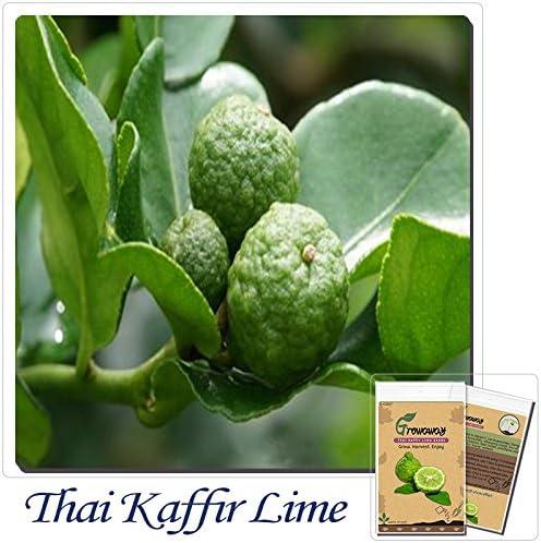 Amazon.com: 20 pcs Kaffir lima, semillas de Kreen limón ...