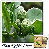 Mayan Seeds LLC 20 pcs Kaffir Lime seeds,Kreen Lemon Seeds,Super Fragrant, Organic Fruit Seeds,Source From Thailand,plant for home & garden
