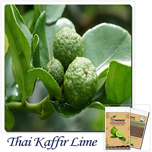 20 pcs Kaffir Lime seeds,Kreen Lemon Seeds,Super Fragrant, Organic Fruit Seeds,Source From Thailand,plant for home & garden SVI