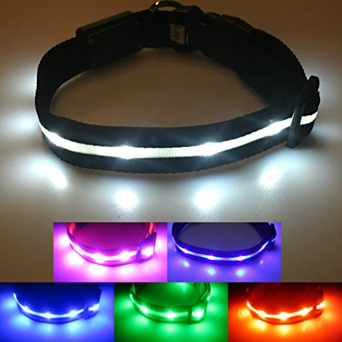 Blazin' Safety LED Dog Collar – USB Rechargeable with Water Resistant Flashing Light 51xh0 6CKCL