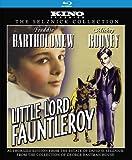 Little Lord Fauntleroy: Kino Classics Remastered Edition [Blu-ray]