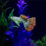 Hot Sale!DEESEE(TM)Plastic Swimming Faux Fake Gold Fish Aquarium Fish Tank Decor Orname Gift (C)