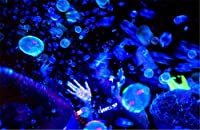 Tekno TB350B Glowing Bubble Fluid-Blue (Half Gal) Bubble Machine Fluid