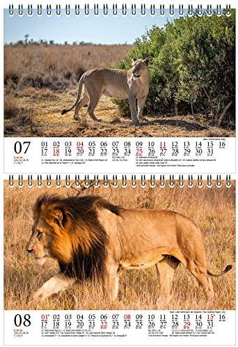 Löwenzauber DIN A5 Tischkalender für 2021 Löwen und Löwenbabys - Geschenkset Inhalt: 1x Kalender, 1x Weihnachts- und 1x Grußkarte (insgesamt 3 Teile)