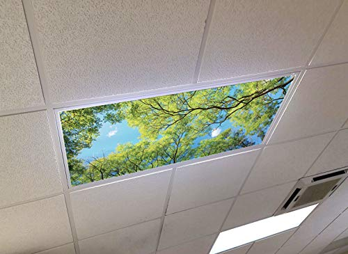 Forest Canopy View - 2ft x 4ft Drop Ceiling