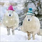 Charity Christmas Cards (ALM8682) In Aid Of The National Autistic Society - Sheep in Woolly Hats - Pack Of 8 Cards