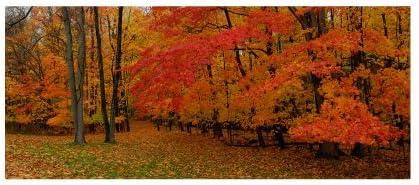 Amazon.com: Ohio otoño por Kurt Shaffer Lienzo Arte de la