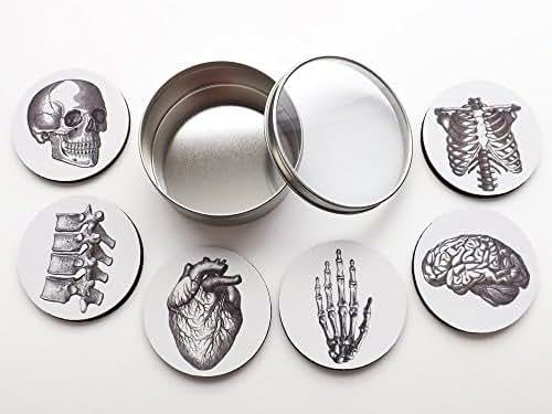 Anatomy Coasters Gift Set six 3.5 inch coasters brain skull anatomical heart human body skeleton doctor nurse graduation