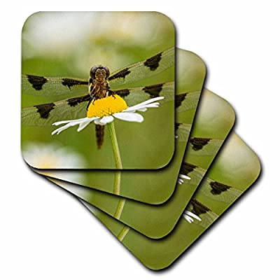 3dRose Danita Delimont - Insects - Female Blue Dasher dragonfly on daisy, Kentucky - Coasters