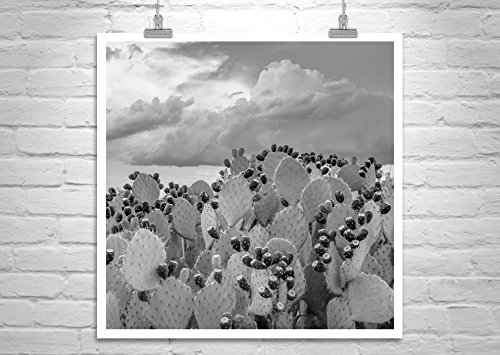 Cactus Art, Black and White Cactus Photograph, Prickly Pear Cactus Picture by Murray Bolesta  Fine Art Prints