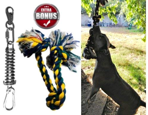 Spring Dog - SoCal Bully Spring Pole - (1) Dog Conditioner - Muscle Builder - (1) $15 Value Heavy Duty 3 Knott Tug Rope Toy Included! - Healthy Teeth Flosser-Fun for Pitbull & All Breeds! - Free Prime Shipping!