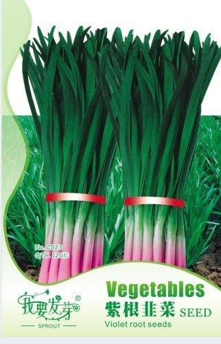 10 Original Packs, 120 Seeds / Pack, Chinese Leek Seeds aka Garlic Chive w/ Purple Roots Allium Tuberosum herb & medicinal
