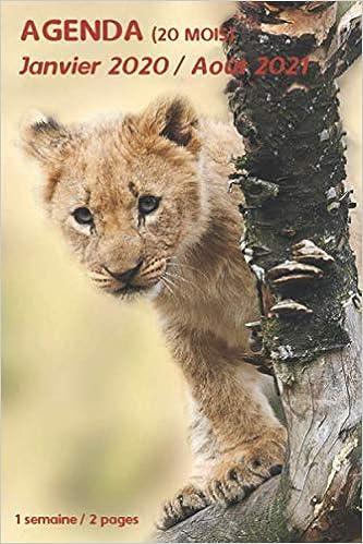 AGENDA (20 mois)   Janvier 2020 / Août 2021: lionceau lion