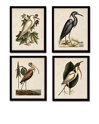 Sea Birds Print Set No.2 Set of 4 Giclee Fine Art Prints - Unframed