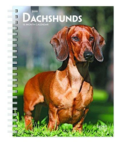 Dachshunds 2019 6 x 7.75 Inch Weekly Engagement Calendar, Animals Dog Breeds (Multilingual Edition)
