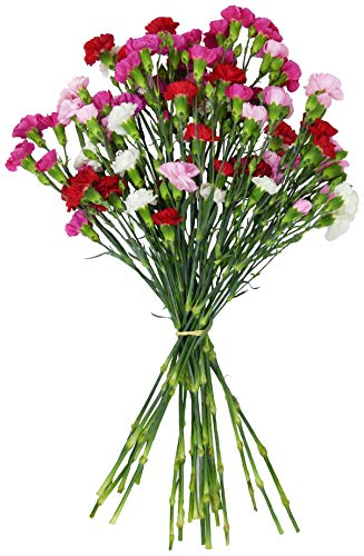Benchmark Bouquets 20 stem Rainbow Mini Carnations, No Vase (Fresh Cut Flowers)