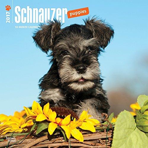 Schnauzer Puppies 2017 Square (Multilingual Edition)
