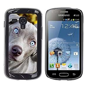TopCaseStore / la caja del caucho duro de la cubierta de protección de la piel - Blue Weimaraner Vizsla Puppy Dog - Samsung Galaxy S Duos S7562