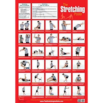 photograph regarding Stretching Charts Free Printable referred to as The Stretching Poster
