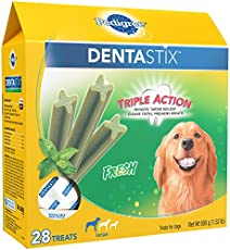 Dog Teeth Extraction Recovery 6 Things You Need To Know