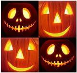 Best MySeeds.Co Pumpkin Seeds - 10 JACK O LANTERN Pumpkin seeds PERFECT FOR Review
