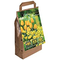 Tulips Big Buy Value Pack
