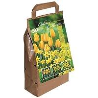 Tulips Big Buy Value Pack