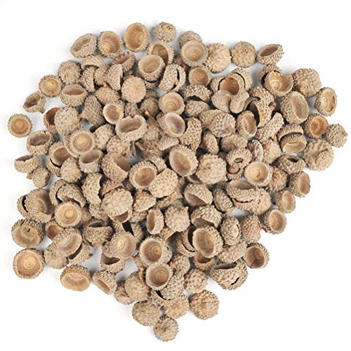 (BUYGOO Natural Acorn Caps for Crafting Decoration DIY Home Party Wedding Decor Thanksgiving Christmas Festival (250g)