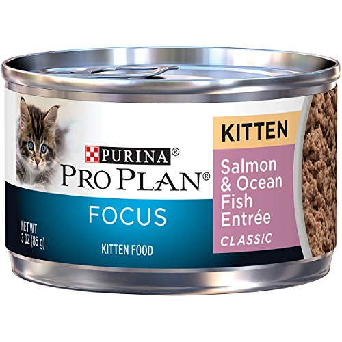 Purina Pro Plan FOCUS Salmon & Fish Wet Kitten Food