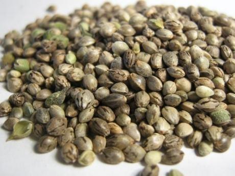 Ak47 Seeds  7 Seeds Set