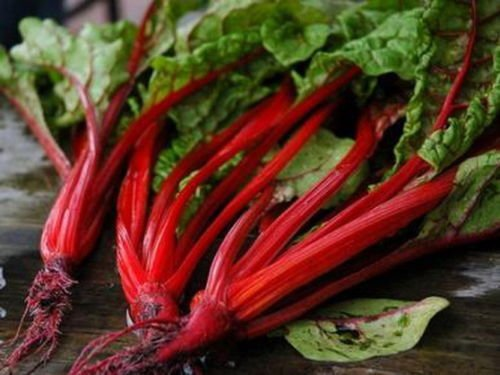 350 Seeds of Beta vulgaris cicla, Ruby Red Swiss Chard, Perpetual Spinach
