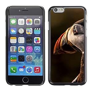 Be Good Phone Accessory // Dura Cáscara cubierta Protectora Caso Carcasa Funda de Protección para Apple Iphone 6 Plus 5.5 // bird sunset cute ornithology nature