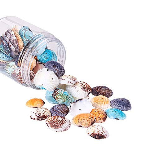 PH PandaHall 85 pcs Dyed Natural Conch Shell Beads Drilled Tiny Scallop Sea Shells Ocean Beach Seashells Craft Charms for Candle Making Home Decoration Party Wedding Decor from PH PandaHall