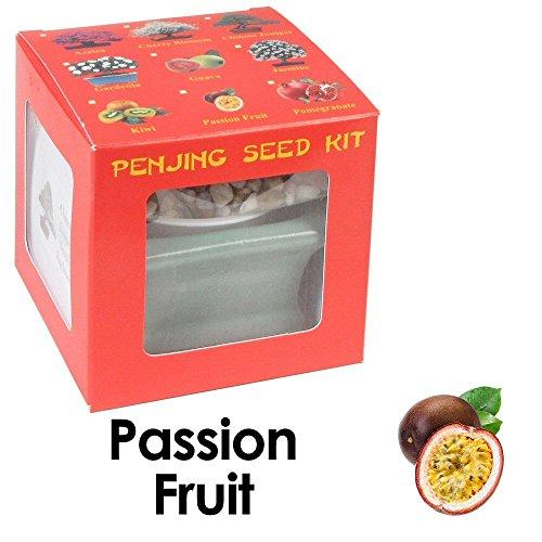fruit bearing bonsai - 6