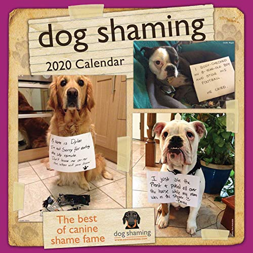 Dog Shaming 2020 Wall Calendar