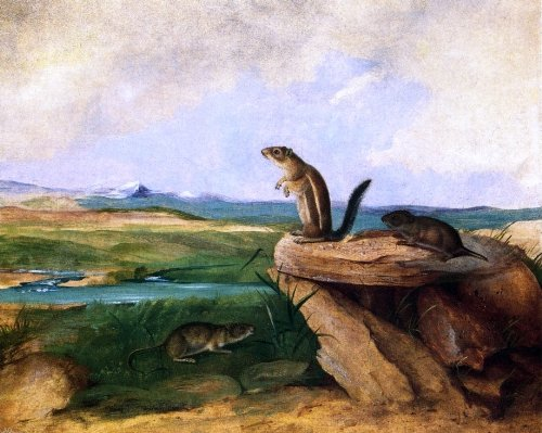 "John Woodhouse Audubon Harris Antelope Ground Squirrel, N.M. California Vole and Wood Rat - 20.05"" x 25.05"" Peel & Stick Removable Wall Decal"