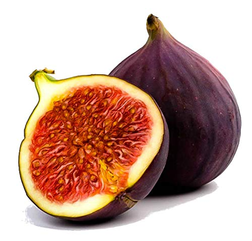 Two Fig Plants Live Tree Brown Turkey Mission Fruit Plant Well Rooted and Sturdy - USA_Mall