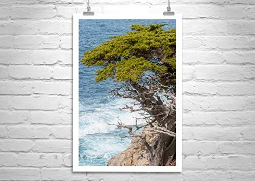 Carmel by the Sea Art Print, Point Lobos Ocean Picture, Monterey Cypress Tree Photo