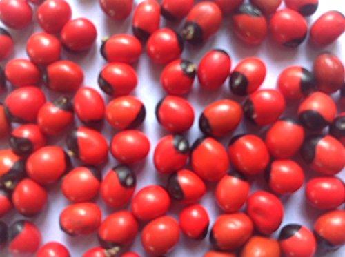 Seeds village Red Gaungchi Seeds (Pack of 250): Amazon in: Garden