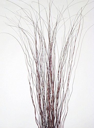 UPC 812912019496, GreenFloralCrafts Whispies 4' Tall, Pack of 48 Stems - Brown