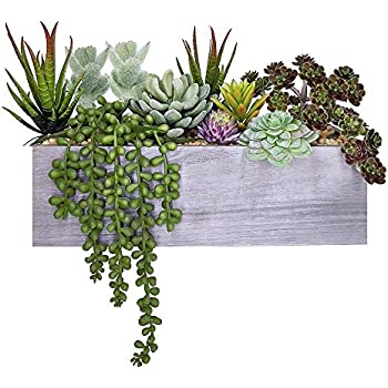 Amazon Com Mygift Artificial Mixed Succulent Plants In