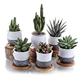 T4U 6cm Ceramic Mini Korea Style Snow Serial Full Set succulent Plant Pot Cactus Plant Pot Flower Pot Container Planter with Bamboo Trays Package 1 Pack of 6